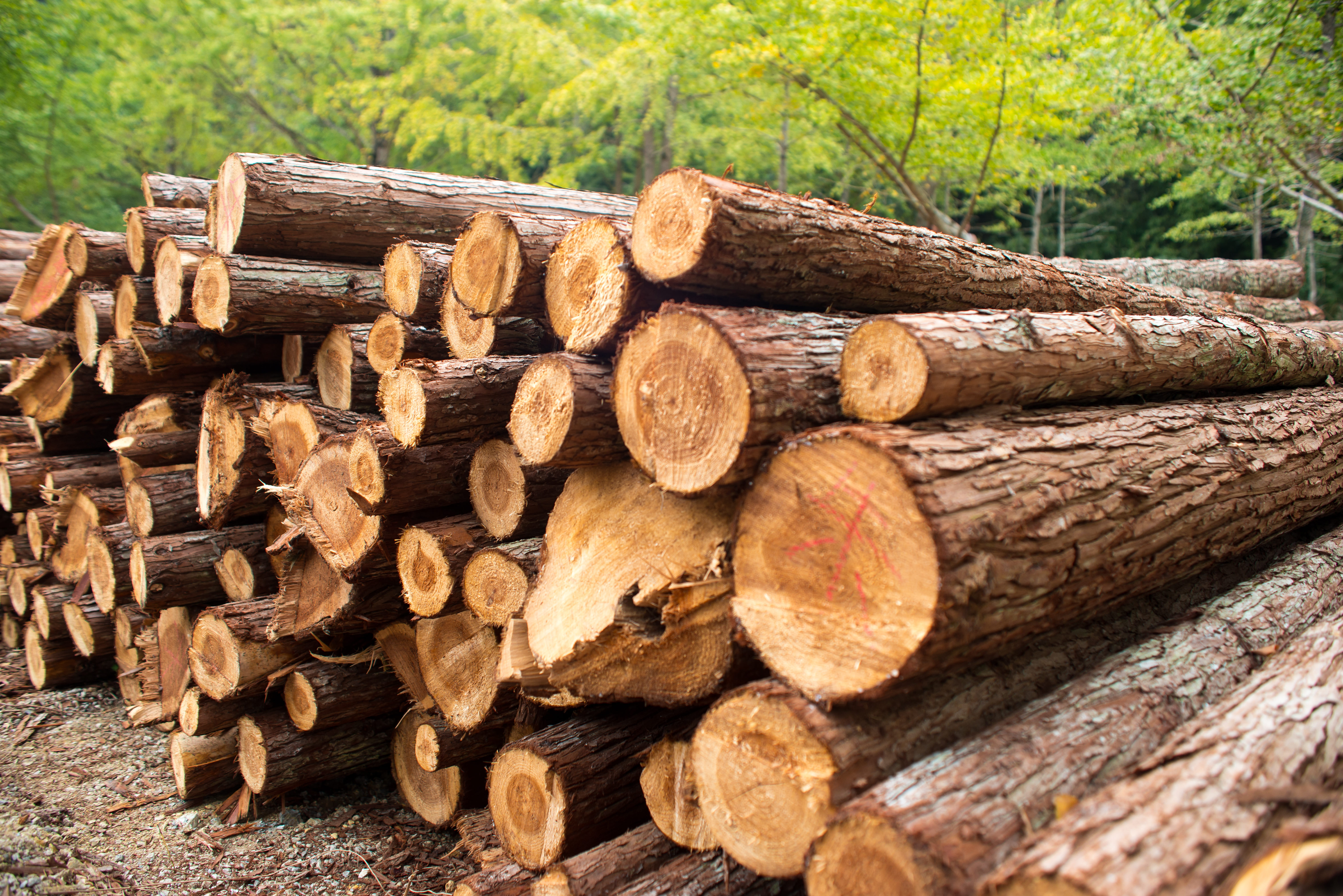 Lumber makes new record highs ishares s p global timber