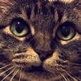 Main Street Fat Cat