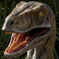 financial.velociraptor