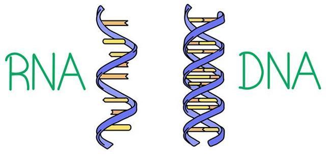 4 RNA Therapy Stocks For A Biotech Portfolio
