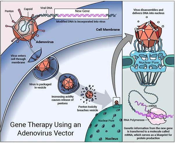 Rocket Pharmaceuticals: A Fully Fueled Gene Therapy ...